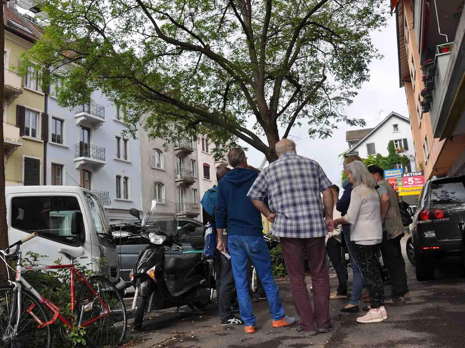 Einer der drei Bäume, der im Zuge der Sanierung Hönggerstrasse gefällt werden soll.