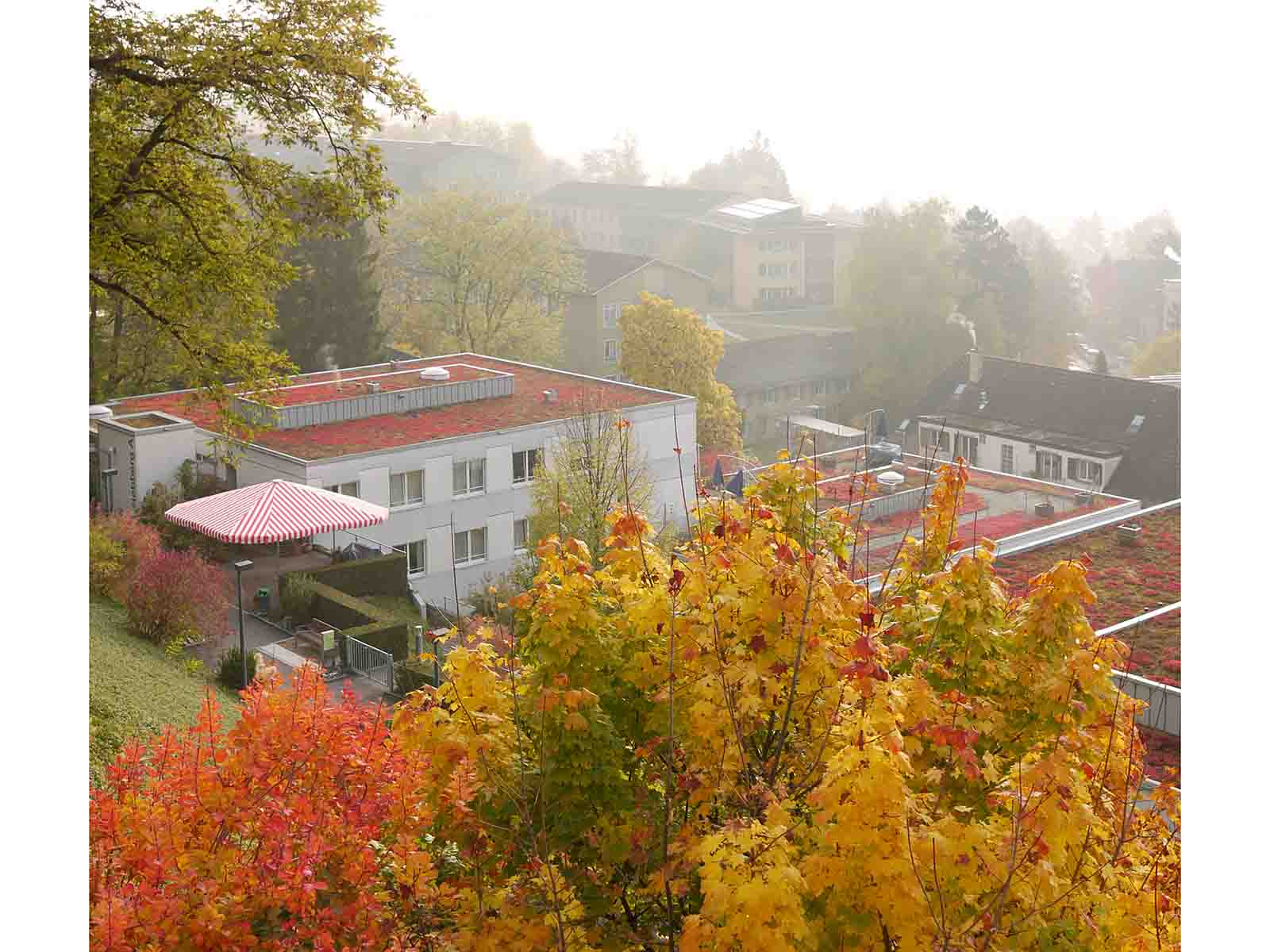 Herbstfarben im Rebberg-Areal.